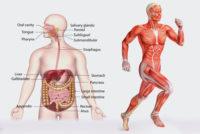 Kurzlehrgang Physiologie an der Tristyle Academy